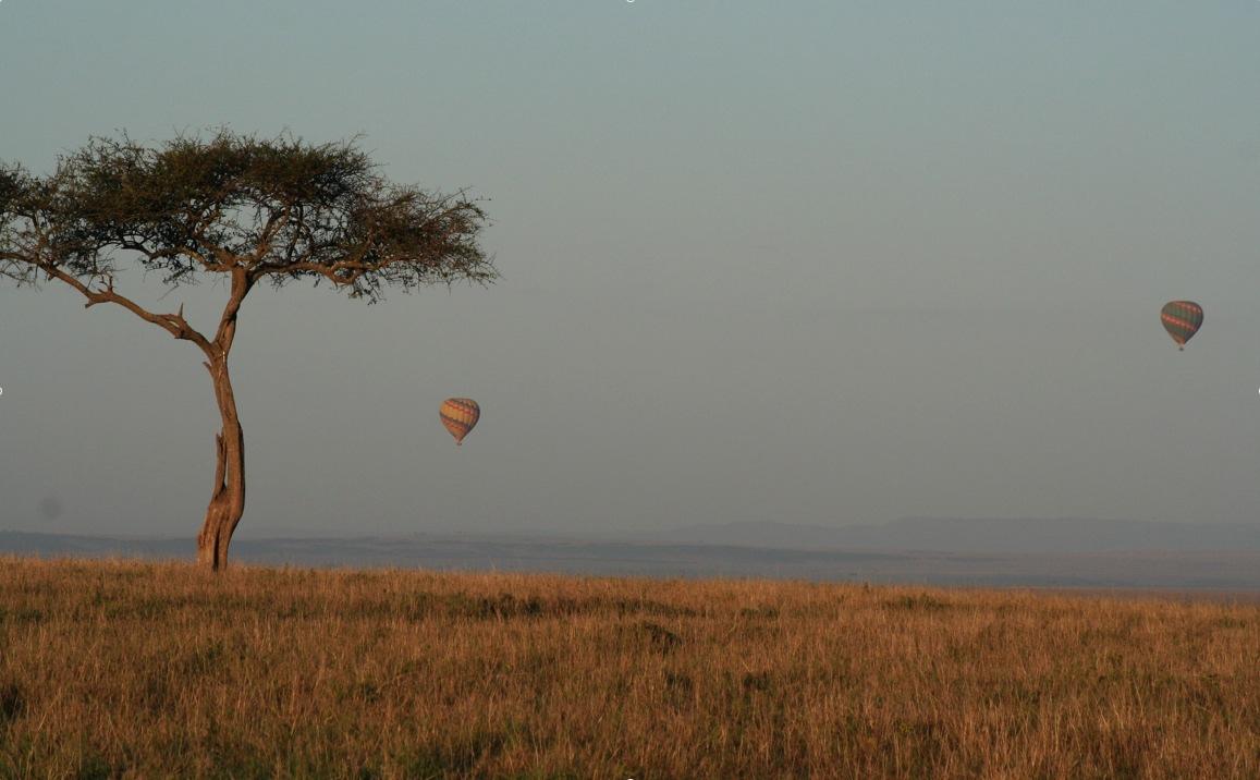 Au kenya avec mes enfants - Felin de la savane ...