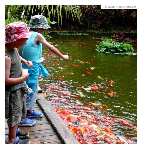 En guadeloupe avec mes enfants for Au jardin des colibris guadeloupe