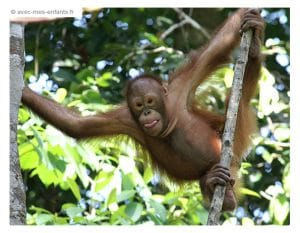 voyage-famille-enfant-borneo-singe-matang-wildlife -center
