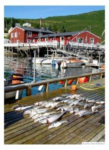 blog-voyage-famille-norvege-en-famille-peche