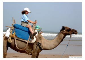essaouira-en-famille-blog-voyage-en-famille-chameau