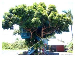 hawai-en-famille-manguier