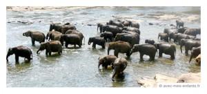 sri-lanka-en-famille-orhelinat-elephants