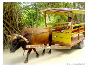 seychelles-en-famille-blog-voyage-famille-char-a-boeuf