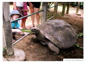 seychelles-en-famille-blog-voyage-famille-tortue-geante