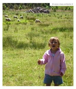 nouvelle-zelande-en-famille - moutons