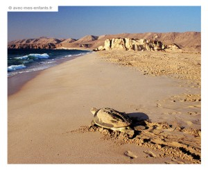 blog-voyage-famille-oman-en-famille-tortues