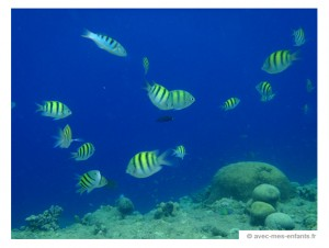 philippines-en-famille-visayas-snorkeling-balicasag