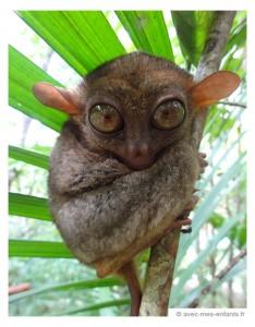philippines-en-famille-visayas-tarsier