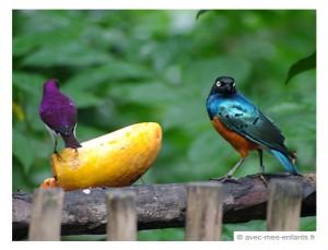singapour-en-famille-jurong-bird-park-2