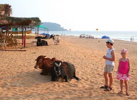 blog-voyage-famille-inde-avec-enfants-guide-pratique