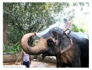 voyage-inde-en-famille-goa-tropical-spice-plantation-elephant