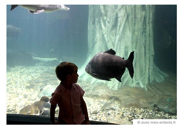 voyage-famille-enfant-malaisie-kuala-lumpur-KLCC -aquarium