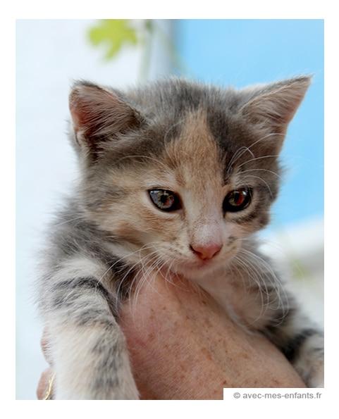 voyage-famille-athenes-avec-enfants-chaton - Avec Mes Enfants