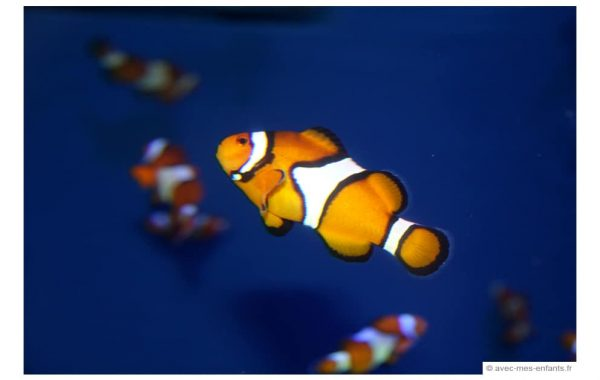 los-angeles-en-famille-long-beach-aquarium-nemo