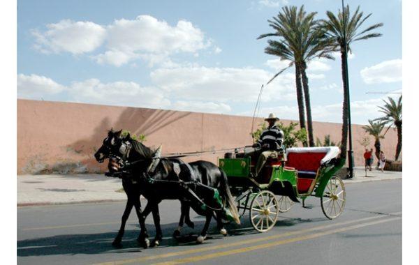 marrakech-avec-des-enfants-caleche