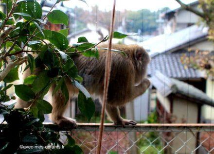Kyoto-en-famille-singe-macaque-japonais