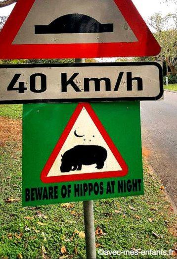Safari-afrique-du-sud-en-famille