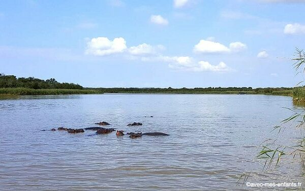 safari-afrique-du-sud-en-famille-hippopotames-santa-lucia