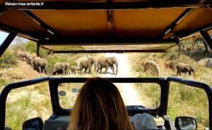 Safari-afrique-du-sud-en-famille-kruger-elephants