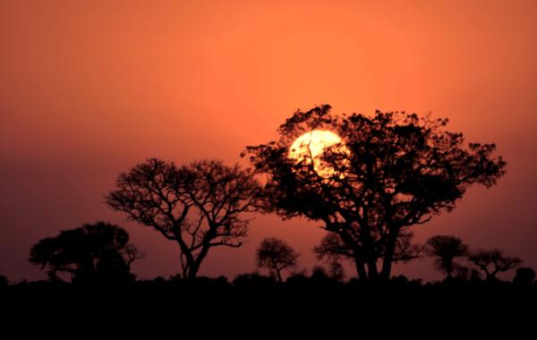 safari-en-famille-en-afrique-du-sud-kruger-park