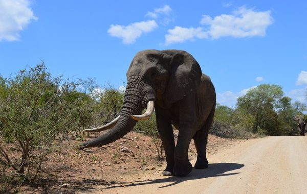 safari-en-famille-en-afrique-du-sud