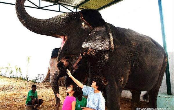 rajasthan-en-famille-inde-avec-enfants-alephants-elefantastic