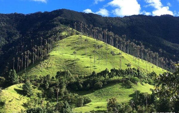 colombie-en-famille-cocora-valle-excursion