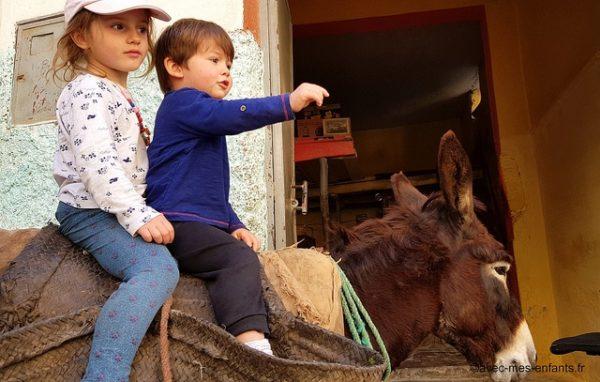 maroc-en-famille-ane