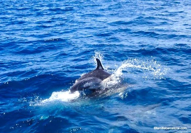 dauphins-sagres-algarve-en-famille-portugal