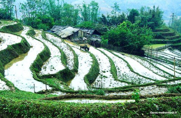vietnam-sapa-trek-avec-enfants-rizieres