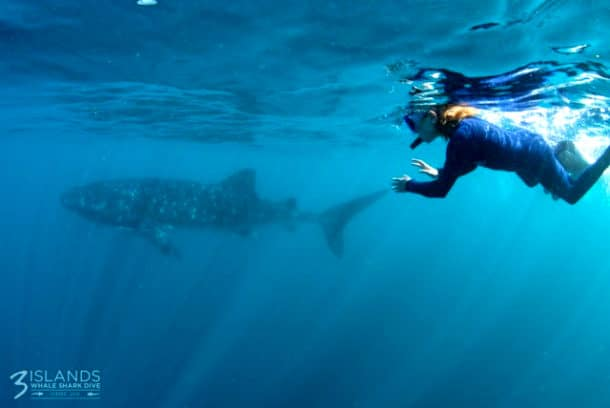 australie-ningalo-reef-requins-baleine