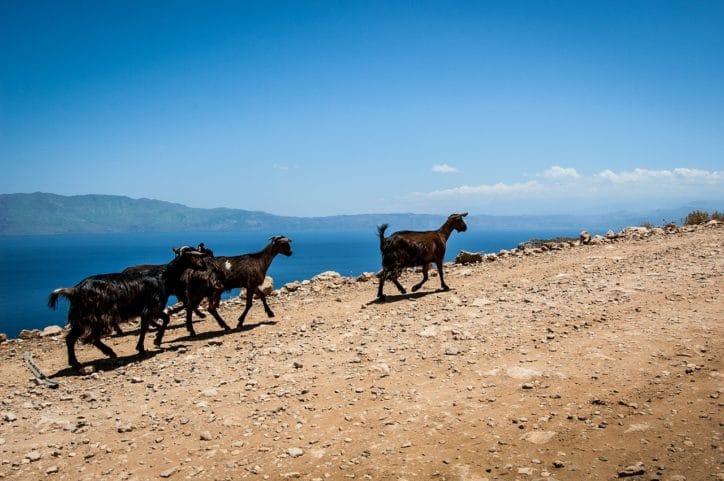 visiter-crete-avec-enfants