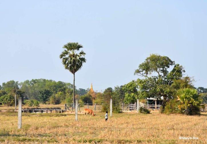 blog-voyage-en-famille-cambodge