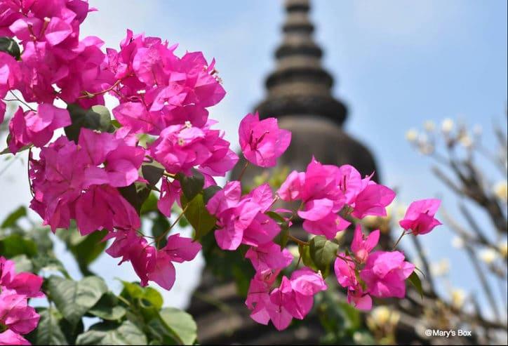 phnom-penh-en-famille-cambodge