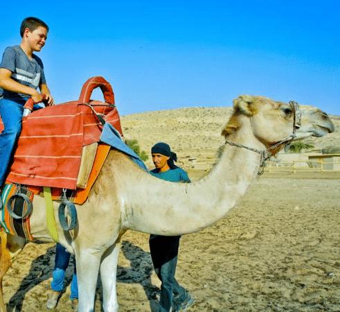 mer-morte-en-famille-negev-camel-ranch