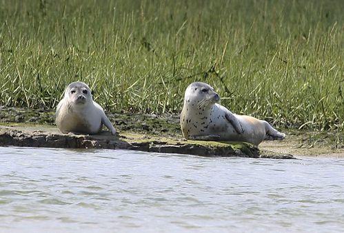 Cotentin en famille voir des phoques Baie des Veys