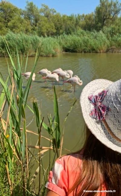 camargue-en-famille-flamants-roses